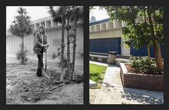 Los Alamitos High Then and Now - 1972 and 2017
