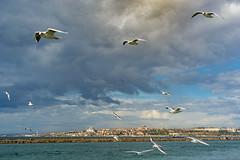 2013-Turquia-Istambul-0123.jpg