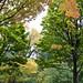 North Park Blocks Autumn Trees 1 of 2