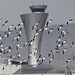 Airport Birds by photo101