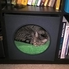"""My momma had a kitty visit, and brought them a new """"kitty house"""" that perfectly fits my bookshelf. 😻 I assure you, cleocatra is supremely happy. . . . . . #meow #catsofinstagram #tabby #kitten #ikea #ikeacats #cathouse #thanksmom"""