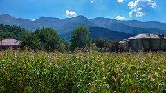Widok na Kaukaz z domu naszego kierowcy.