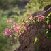 flowering vine por apmckinlay