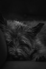 Sleepy pooch