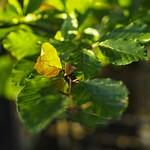 2017:10:30 17:23:34 - Herbst Farben Blätter