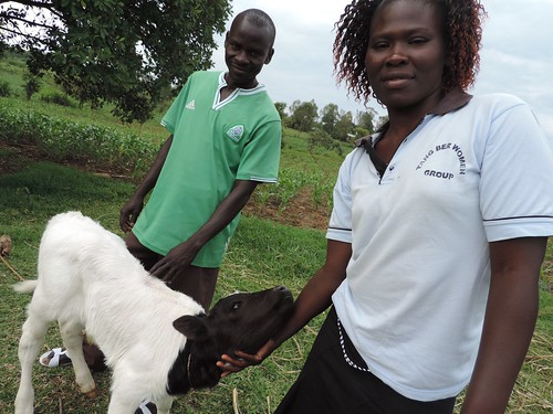 Charles and Quinter Migot display their newly born improved calf in Homabay County, Kenya.