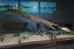 Mercure Kakadu Crocodile