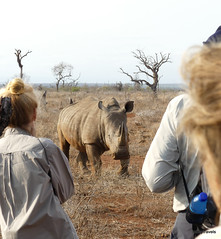 Walking with White Rhino, Mkhaya (21)