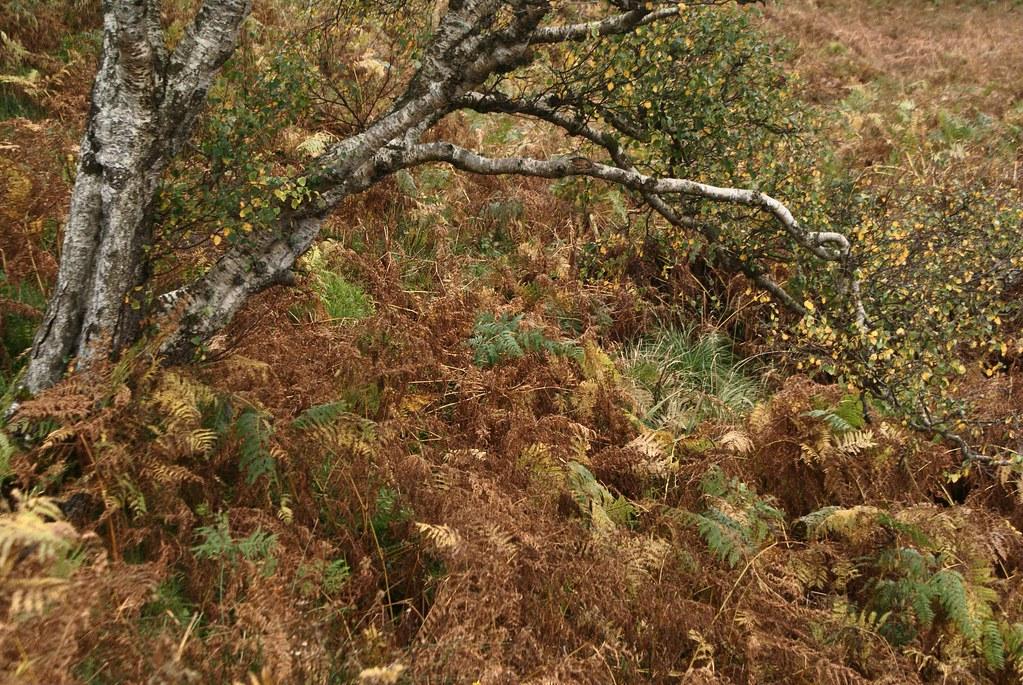 Paysage de landes de l'île d'Arran.