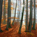 another day ... another forest ... by Sandra Bartocha