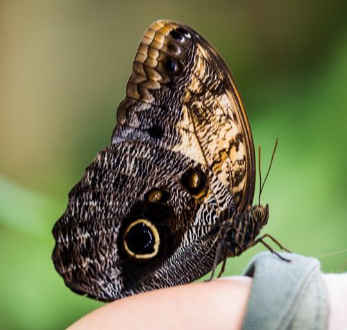 Butterfly On Emmas Shoulder