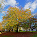 Autumn tree with yellow leaves...