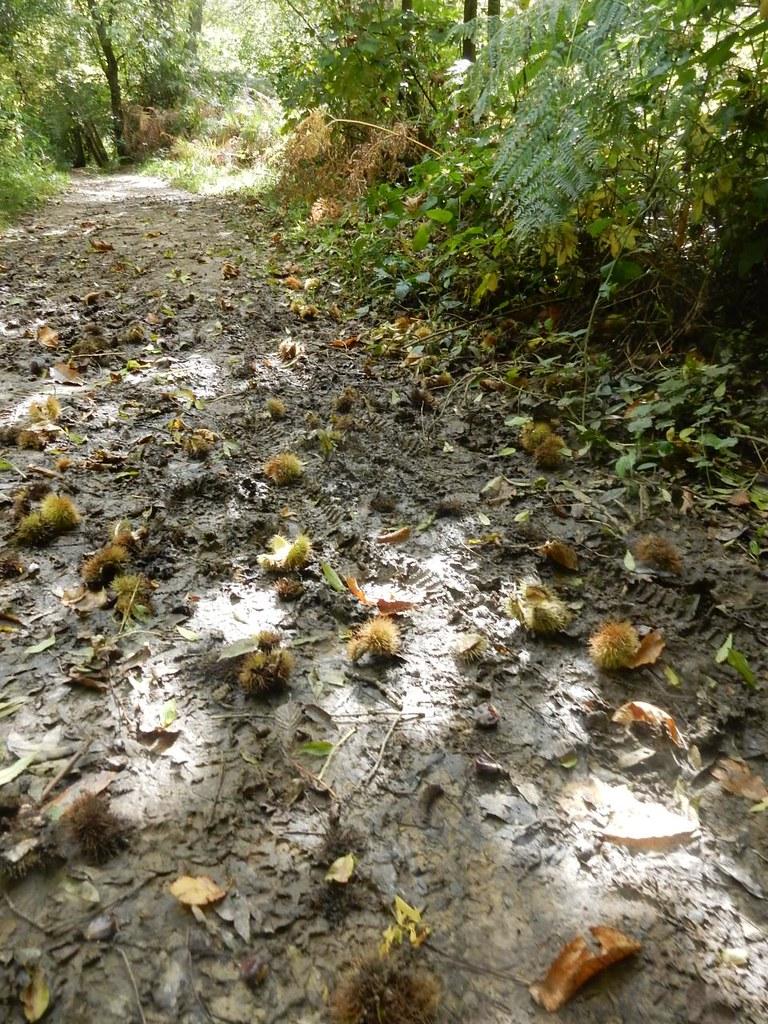 Chestnuts Haywards Heath Circular