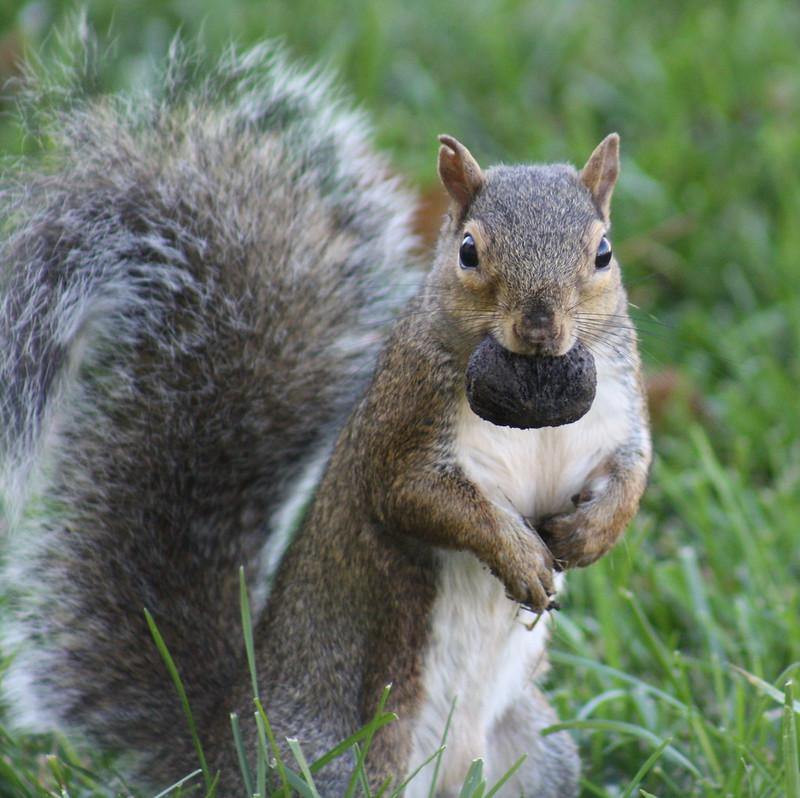Squirrel Invasion 10