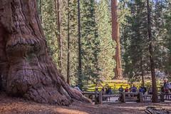 KingsCanyon-SequoiaNatParks-14