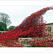 The Poppies Wave. Plymouth Naval War Memorial