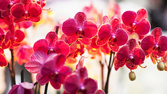 Essential orchid oils help in relaxation, build up the immune system and also have a beneficial impact on vision. <3