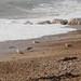 Seagulls on Worthing Beach-EA160276