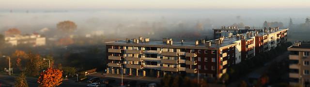 Fog in the suburbs
