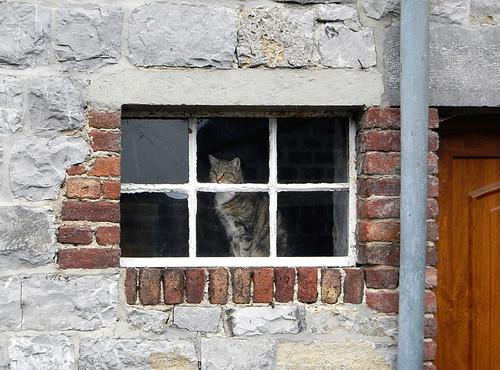 Outside looking in, inside looking out: cat in a window in Dinant, Belgium