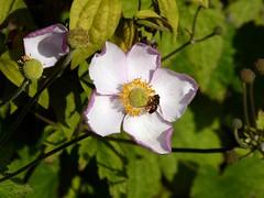 Flower in Bury 2