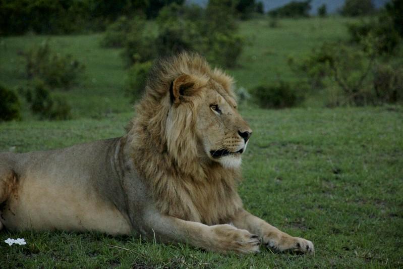 Maasai Mara 1 32
