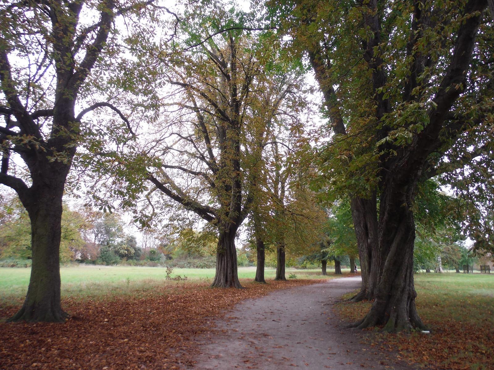 Tree Lined Avenue, Morden Hall Park SWC Walk Short 13 - Morden Hall Park and Merton Abbey Mills