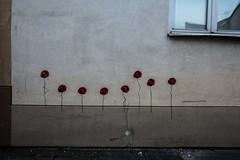 Poppies, Vilnius, Lithuania