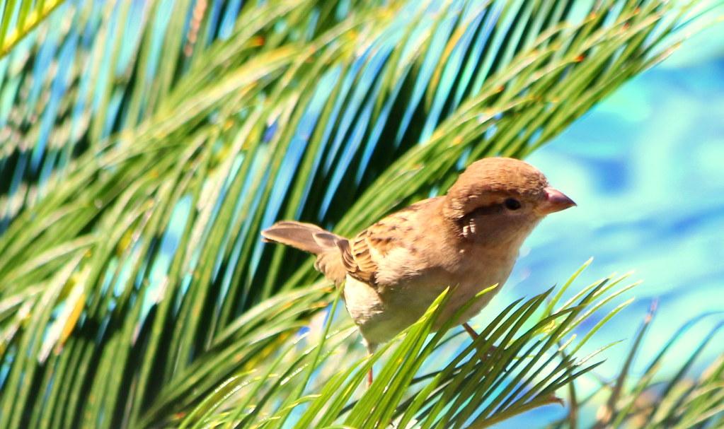 Bird in Palmetto