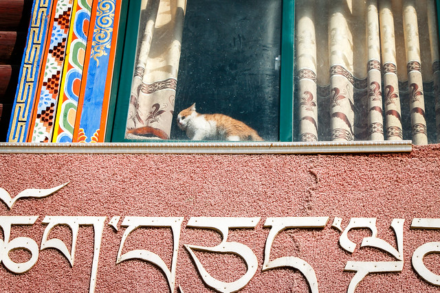 A kitten in the charming window, Yarchen Gar アチェンガルゴンパ エエ感じの窓から見えたネコ