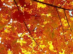 1 is Looking Up or Yellow Sky (poem below)