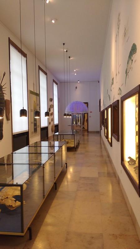 Museo Historia Natural para jóvenes  - 37585988022 8cfbc38885 c - Gante para niños: El Mundo de Kina