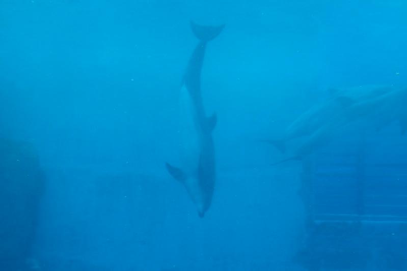名古屋港水族館イルカ