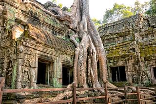 Ta Phrom Angkor Wat Cambodia