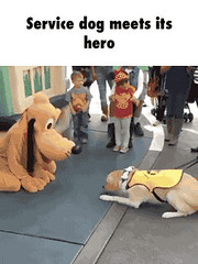 Service dog meets its hero GIF Funny Picture to share nº 17470