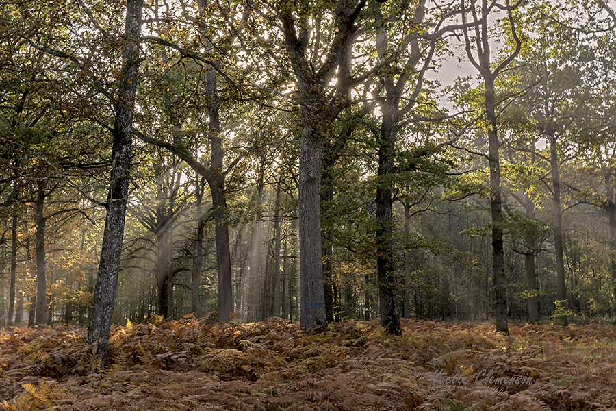La forêt enchantée 37775727822_970ce5ae3d_b