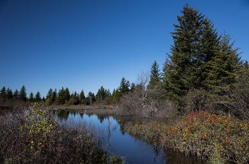 Beaver Dam at Dolly Sods
