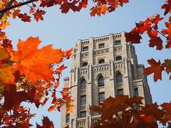 Whitney block in autumn
