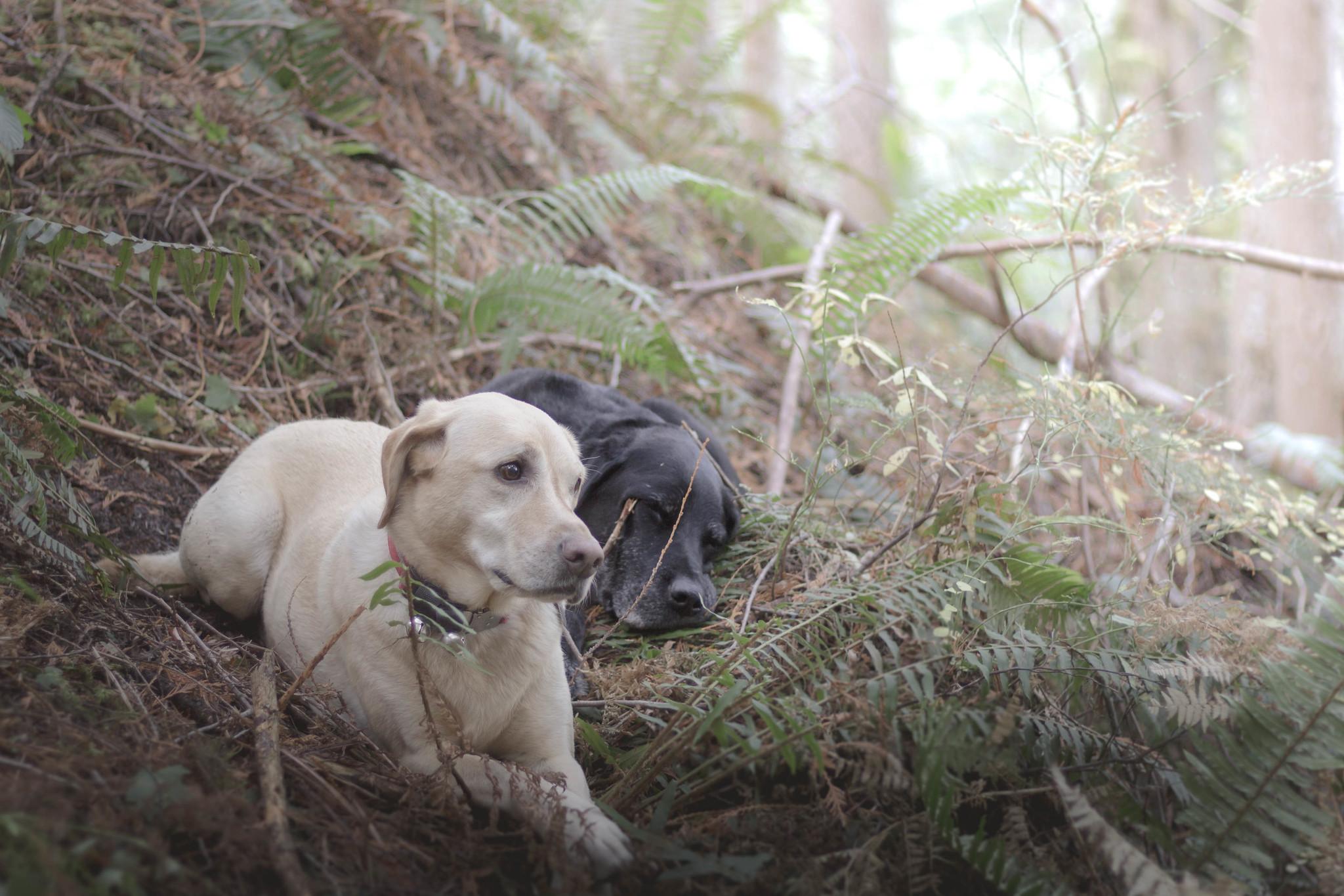 Summit dogs on Index Creek Trail