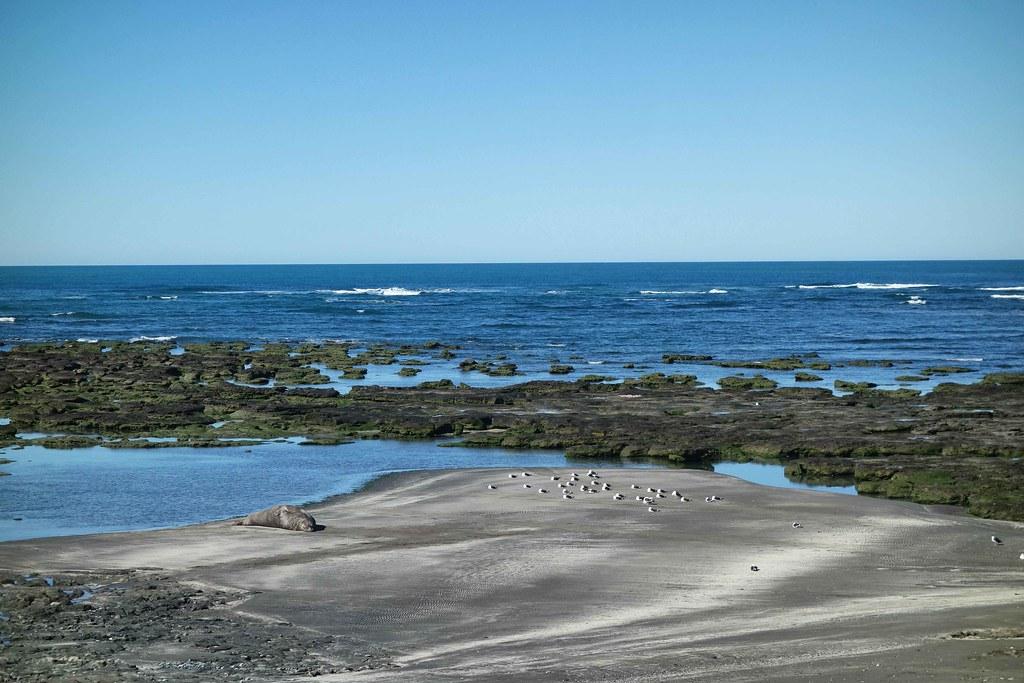 Puerto Piramides - Punta Delgada - Elephant de Mer 2
