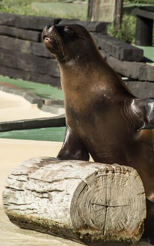 Walrus says goodbye 2