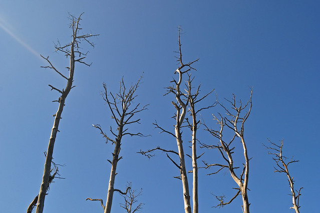 Assateague with Dead Pines (2)