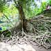 MircK - Bali tree