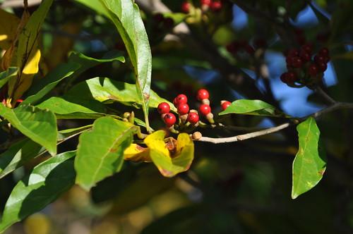 10_3비목열매