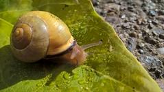 snail 100717 (3)