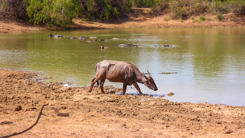 25.06-Yala-National-Park-Sri-Lanka-canon-1500px-043