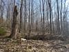 Une forêt de l'Estrie au printemps