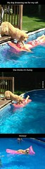 Victory!!! Funny Picture to share nº 17471