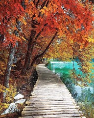 Autumn explosion ~ Plitvice National park, Croatia. Photo by...