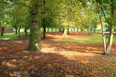 Autumn in Ashton Park